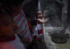 کودک وحشت زده در باغ وحش بانکوک