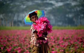 جمعآوری گل