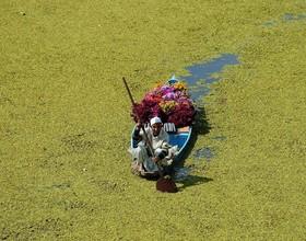 فروشنده گل در هند