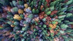 جنگل هفت رنگ پاییزی در منطقه