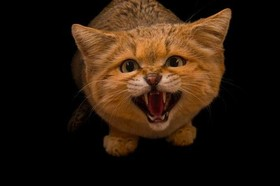 گربه باغ وحش