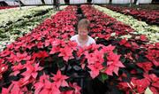 (تصاویر) یک گلخانه در آلمان ، دختران فلسطینی در روستای خان الحمر در کرانه باختری ، ادای احترام پادشاه هلند به ملکه بریتانیا در جریان سفر رسمی به لندن و ...  درعسهای خبری روز