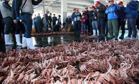 """حراج """"خرچنگهای برفی"""" صید شده از سوی صیادان در بازار ماهی فروشان در """"پوهانگ"""" کره جنوبی"""