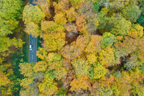 جادهای جنگلی در ساکسونی آلمان