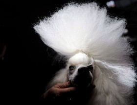(تصاویر)نمایشگاه بینالمللی سگ در پوزنان، لهستان ، جشنواره بینالمللی ساخت مجسمههای شنی در فلوریدا آمریکا ، نمایش نیروی هوایی ایتالیا در کویت و ... در عکسهای خبری روز