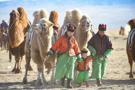 جشنواره شتر در بخش مغولنشین در شمال چین