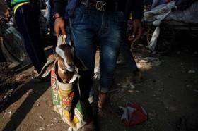 خرید بز زنده از بازاری قدیمی در شهر دهلی هندوستان