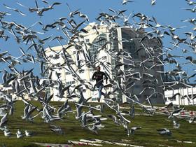 """(تصاویر)پرندگان مهاجر در پارک """"اتحاد"""" در شهر شارجه امارات متحده عربی ، ایستگاه راهآهن شهر مونیخ آلمان ، ضد عفونی کردن جسد یک قربانی ویروس ابولا در جمهوری دموکراتیک کنگو و ... در عکسهای خبری روز"""