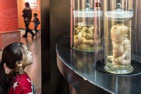 موزه تاریخ طبیعی در شهر پکن
