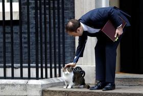 """ناز و نوازش"""" لَری"""" گربه مخصوص مقر نخست وزیری بریتانیا از سوی """"ماتیو هنکاک"""" وزیر بهداشت و تامین اجتماعی"""" کابینه بریتانیا"""