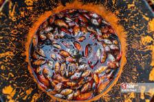 گیلان؛ قطب تولید ماهی قرمز