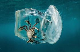 گیر افتادن یک خرچنگ در داخل یک ظرف پلاستیکی درآبهای ساحلی فیلیپین