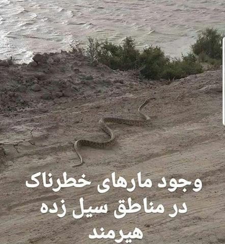 مارهای خطرناک در مناطق سیلزده+عکس - 1