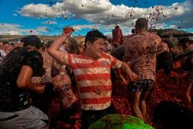(تصاویر)  جشنواره جنگ گوجه فرنگی در کلمبیا