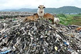 (تصاویر)  مرکز تخلیه زباله در گواتی در جنوب شرق هند