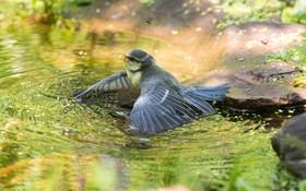 (تصاویر)  پرنده ای در حال شنا