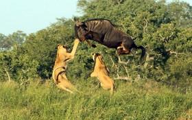 (تصاویر)  صحنه ای دیدنی و حساس از زندگی در حیات وحش و تلاش برای بقا