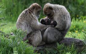 (تصاویر) پدر و مادر در حال تیمار کودک سه هفته ای تازه متولد شده