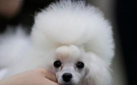 (تصاویر) سگ اسباب بازی که در نمایشگاهی در کره جنوبی در گویانگ به نمایش گذاشته شده است