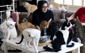 (تصاویر) یک بانوی اهل امارات متحده در تلاش برای نجات گربه های بی خانمان