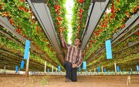 (تصاویر) مزرعه تولید توت فرنگی در یک مزرعه که چند نسل از خانواده جوش وارن به تولید این محصویل مشغول بوده اند
