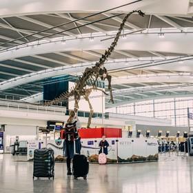 (تصاویر) نمایش اسکلت یک دایناسور در فرودگاه هیترو لندن