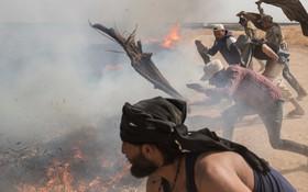 (تصاویر) آتش سوزی در زمین های کشاورزی در شمال شرق سوریه و تلاش اهالی برای خاموش کردن مزارع گندم در حال سوختن