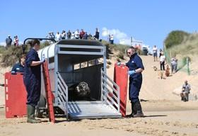(تصاویر) شیردریایی خاکستری که به دلیل گرفتاری در پلاستیک زخمی شده بود پس از درمان در دریا رها می شودز