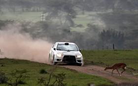 (تصاویر) مسابقه رالی در کنیا و برخورد یک گوزن ایمپالا در حیات وحش با یک خودرو مسابقه