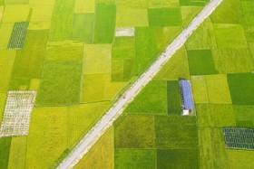 (تصاویر)نیروگاه خورشیدی در میان زمین های کشاورزی در داکا مرکز بنگلادش