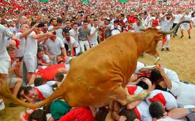 (تصاویر) ورود یک گاو وحشی به میدان گاوبازی در پامپلونای اسپانیا در جشنواره سنت فرمین