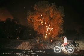 (تصاویر) آتش سوزی مناطق جتگلی در منطقه موگلا در دالمان در ترکیه
