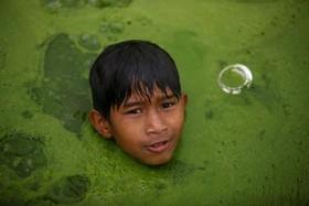 (تصاویر) باختاپور در نپال و کودکی که در تالاب پوشیده از خزه شنا می کند