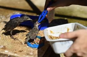 (تصاویر) نگهداری از پرندگان در فرانسه که از گرمای شدید با مشکل مواجه هستند