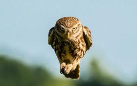 (تصاویر) تصویر دیدنی از جغدی در حال پرواز