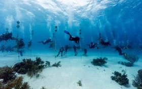 (تصاویر) پرورش مرجان های دریایی برای جلوگیری از نابودی