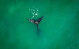 (تصاویر) نهنگی در سواحل برزیل