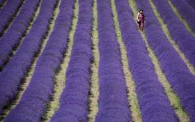 (تصاویر) مزرعه استوخودوس در انگلیس
