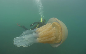 (تصاویر) تصویری از یک عروس دریایی در سواحل انگلیس