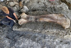 (تصاویر) کشف بزرگترین فسیل استخوان دایناسور در جنوب غربی فرانسه