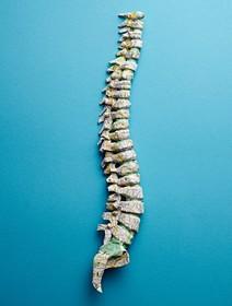 (تصاویر) مهره های بدن انسان که با کاغذ نقشه زوریخ ساخته شده است
