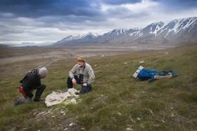 (تصاویر) محققان در حال بررسی علت مرگ گوزن های در منطقه ای در نروژ تاکنون 200 گوزن جان باخته اند