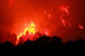 (تصاویر) آتش سوزی جنگل ها در فرانسه