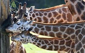 (تصاویر) باغ وحش کویینزلند در استرالیا