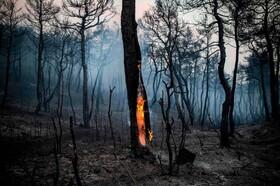 (تصاویر)آتش سوزی جنگل ها در یونان