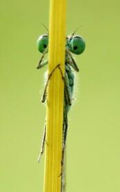 (تصاویر) حشره ای که با عکاس قایم باشک بازی می کند