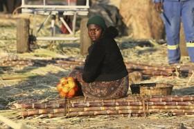 (تصاویر) زن کشاورز زیمبابوه ای محصول نیشکر را برای حمل آماده کرده است در حراره