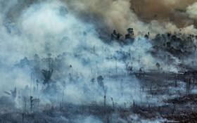 (تصاویر) نمایی از آتش سوزی در جنگل های حفاظت شده در جنگل های بارانی برزیل