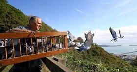 (تصاویر) یک شرکت کننده در مسابقه کبوتربازی در دور انگلیس در تلاش برای تمرین دادن کبوترهایش