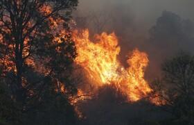 (تصاویر) آتش سوزی در کوئینزلند استرالیا